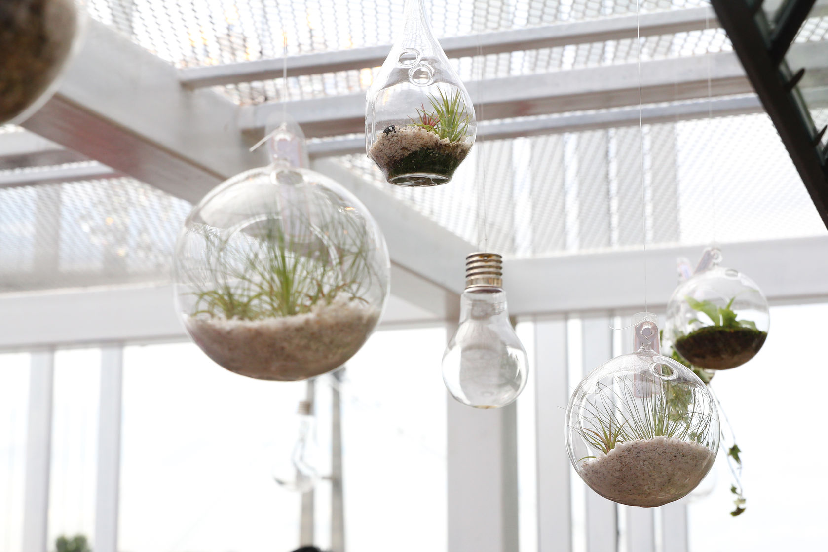 Fun With Plants How To Make A Terrarium
