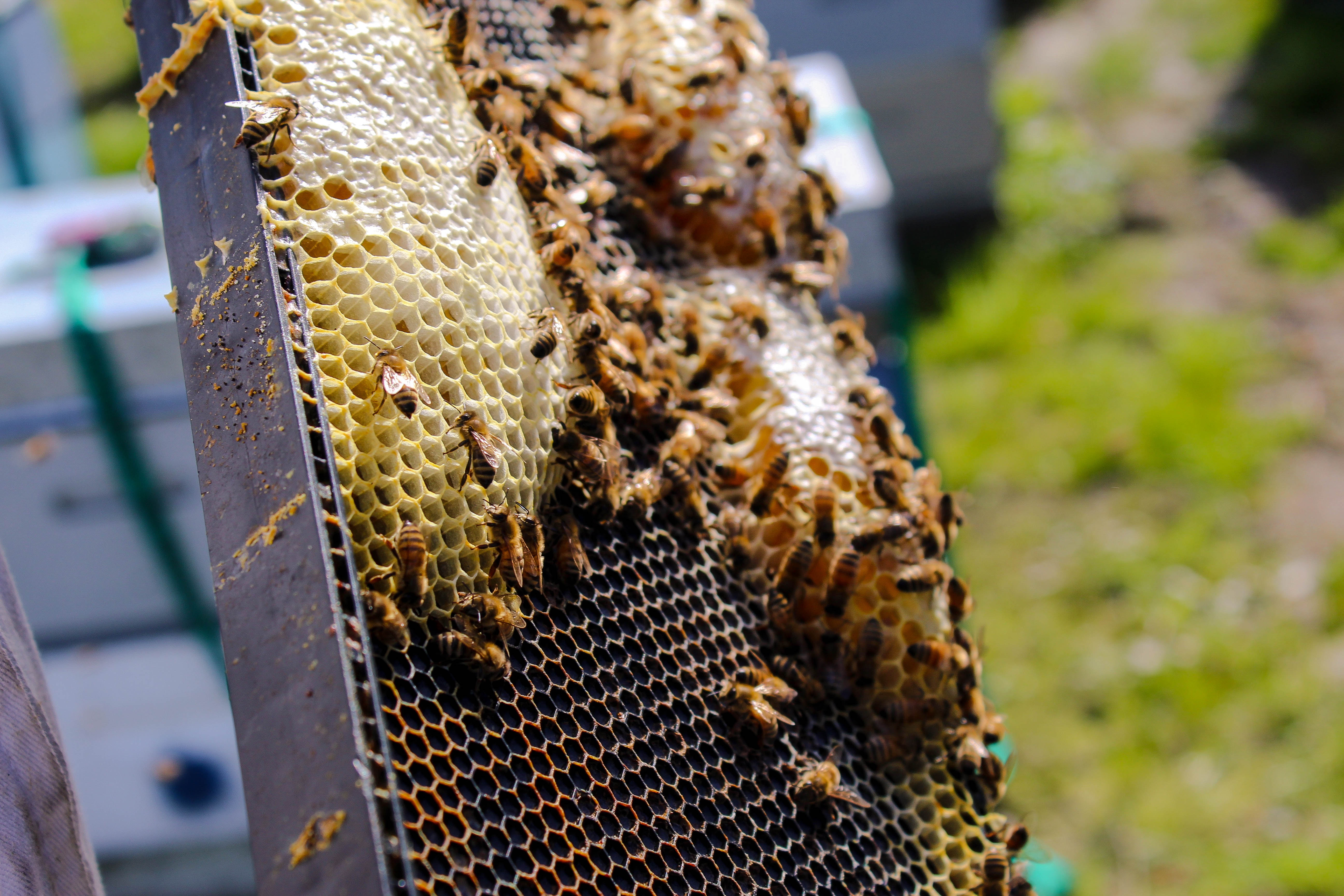 Discussion on this topic: How to Attract Mason Bees, how-to-attract-mason-bees/