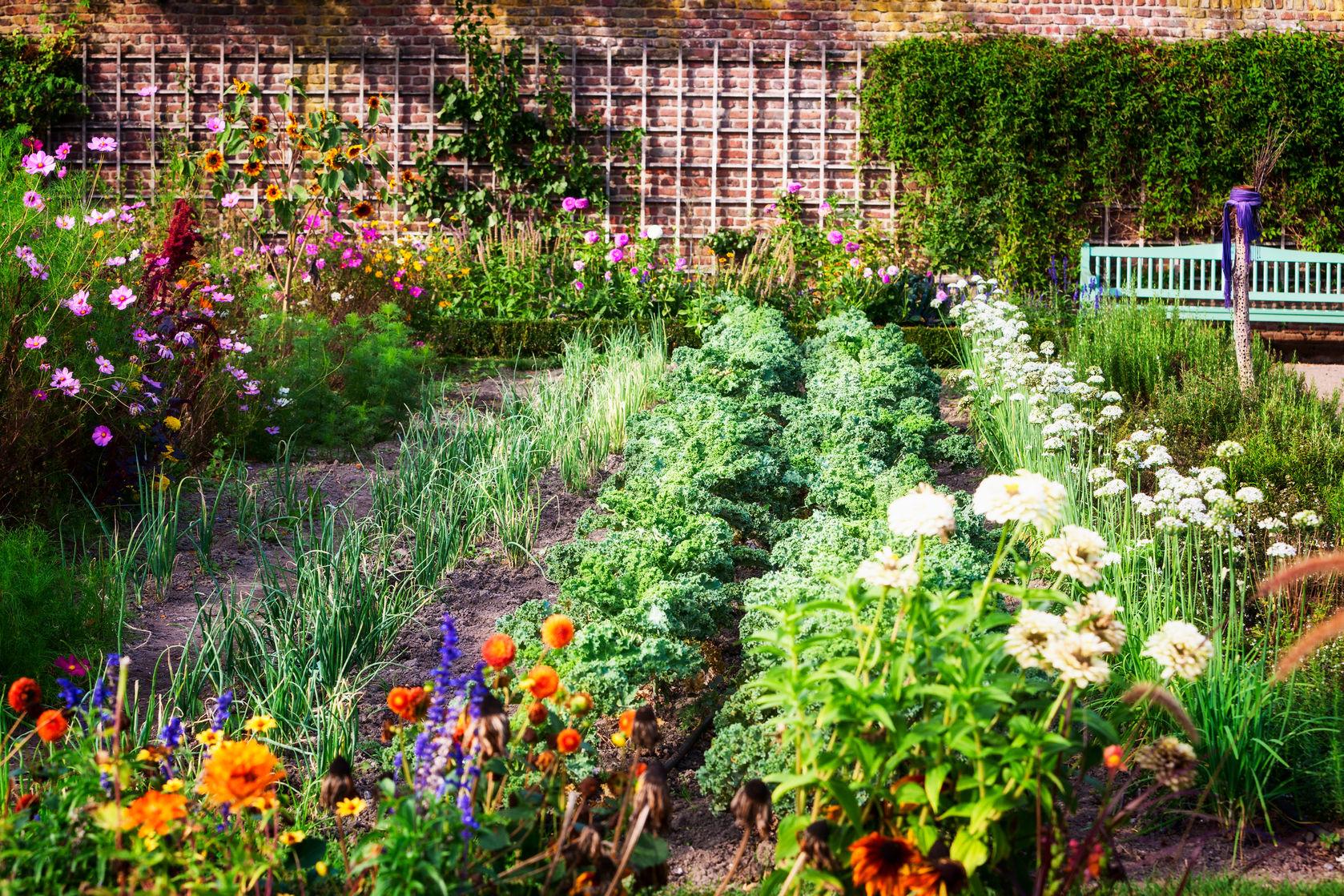 how to grow a delicious and healthy organic garden - Delicious Garden