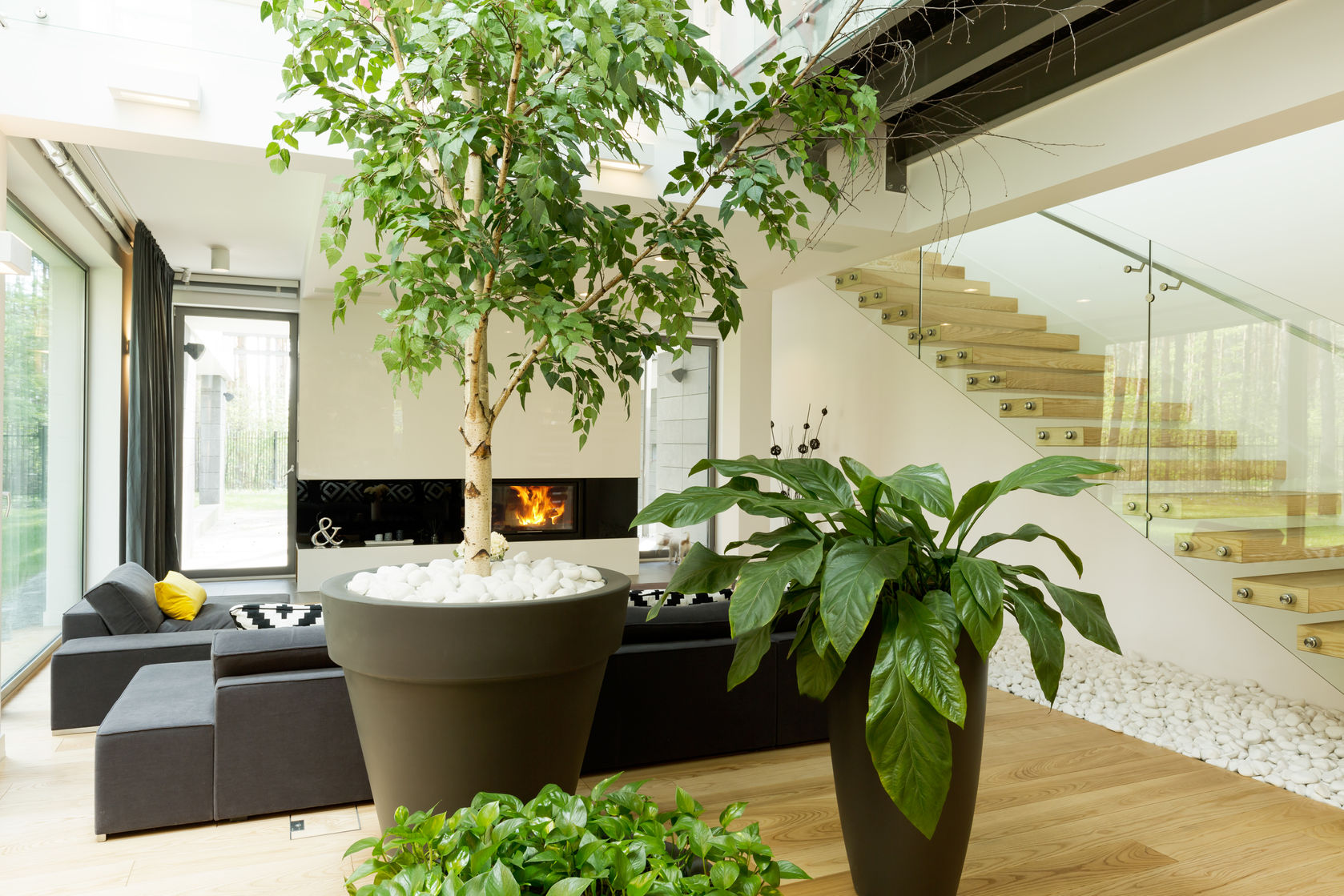 Indoor Gardening: How to Plant & Get Benefits From Indoor Greenery