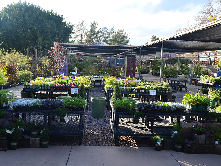 Summerwinds Nursery Mesa