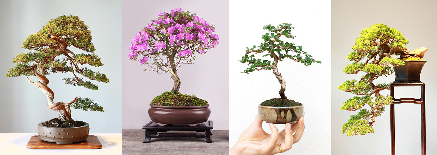 The Art Of Bonsai Wiring Time