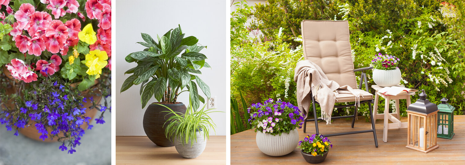 Outdoor Plants And The Containers Theyre Sold In