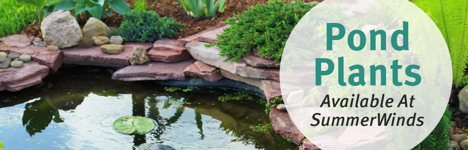 28 summer winds nursery phoenix summerwinds nursery for Pond plants mesa az