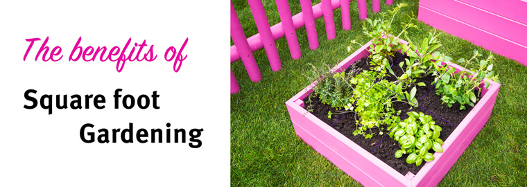 Have You Heard Of Square Foot Gardening Before? This Technique Involves  Dividing Up A Raised Container Bed Into Small Square Sections; The Goal Is  To Create ...