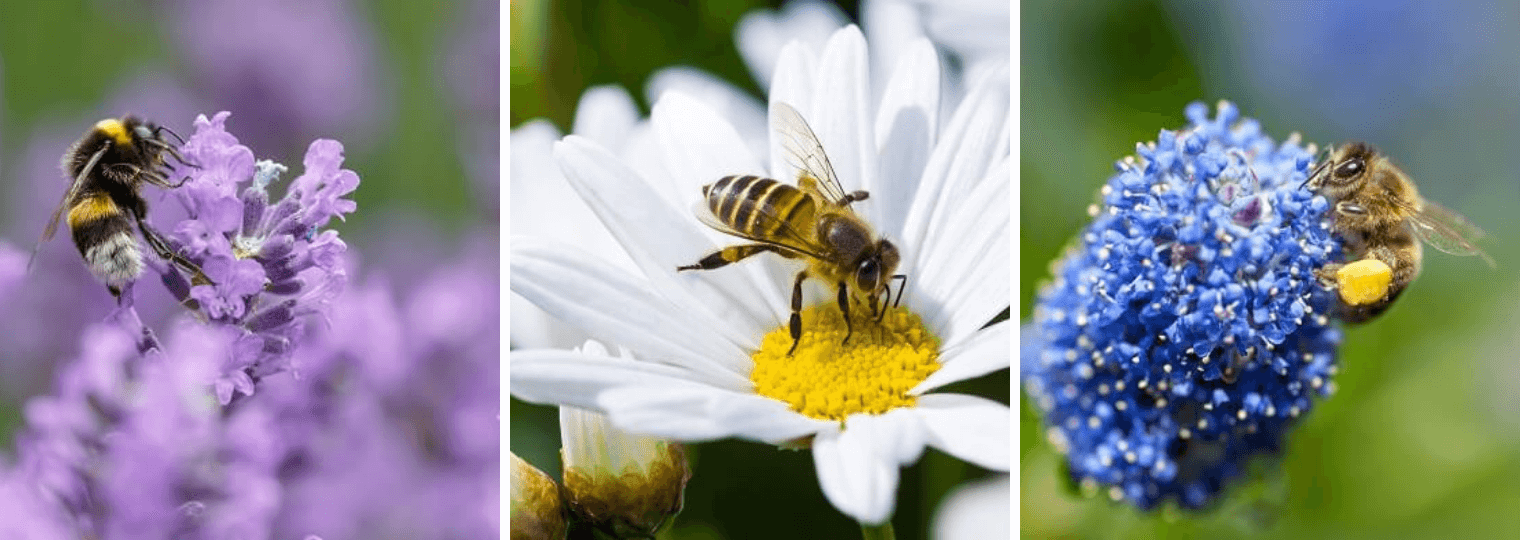 The Best Flowers For Bees When Gardening California