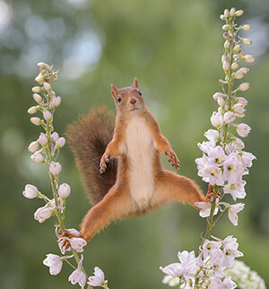 Squirrel in a garden