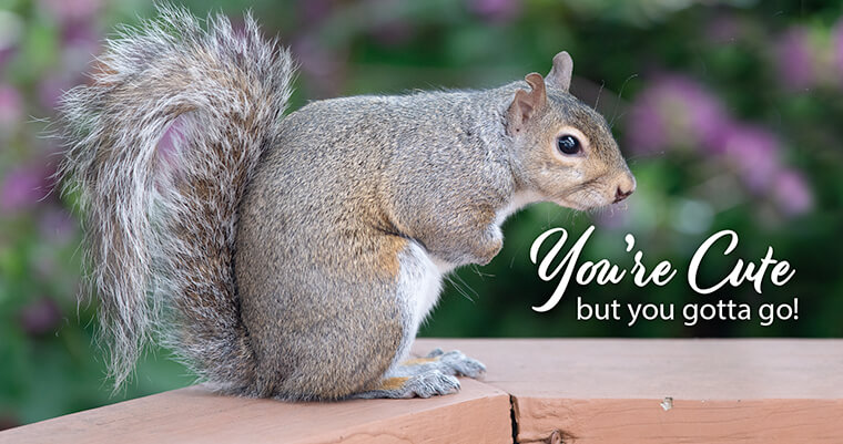 Gardening Tips How To Keep Squirrels Out Of Your Yard