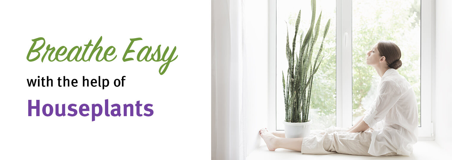 Breathe Easy: How To Purify The Air With 8 Indoor Plants