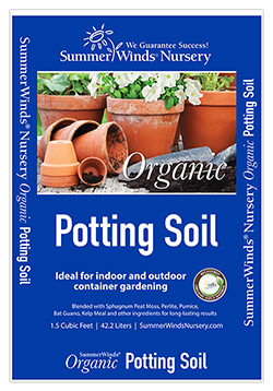 Potting Houseplants